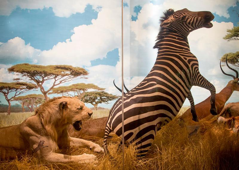 African Veldt diorama