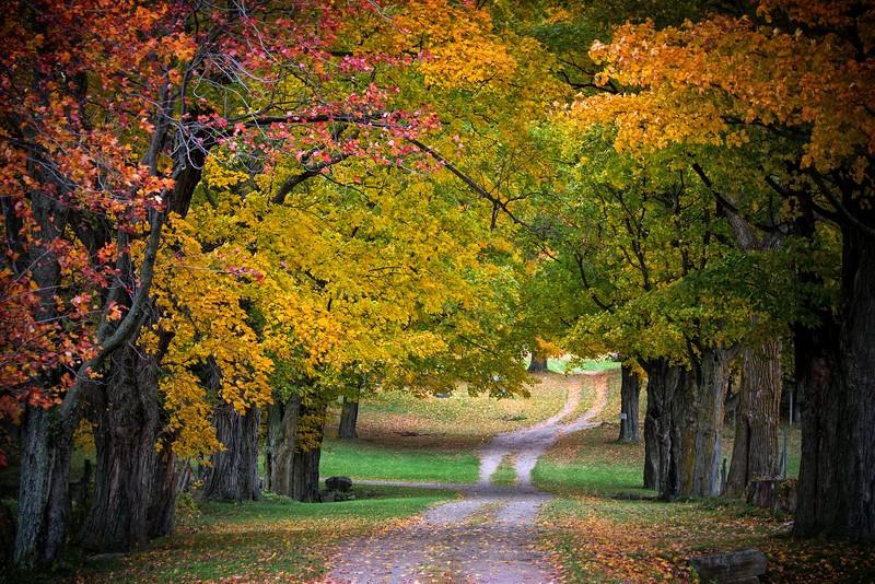 Foliage Oct 2015-26.jpg
