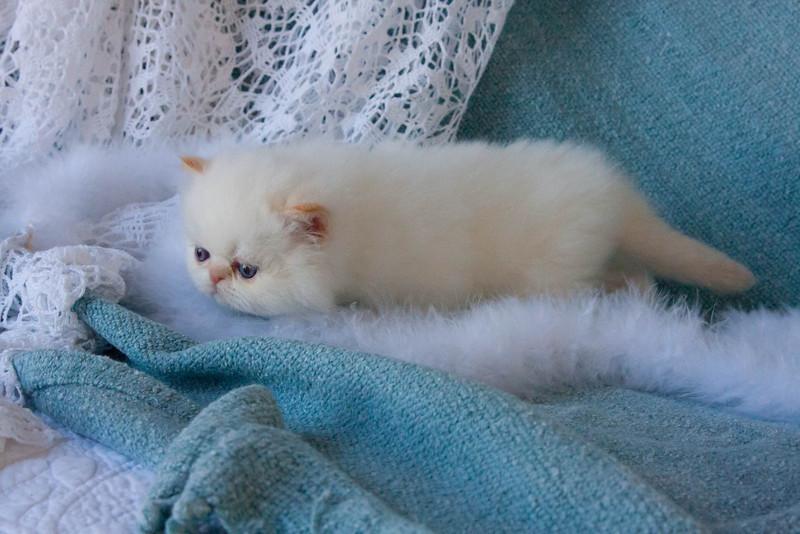 Himi_Kittens_Nov30-8052.jpg