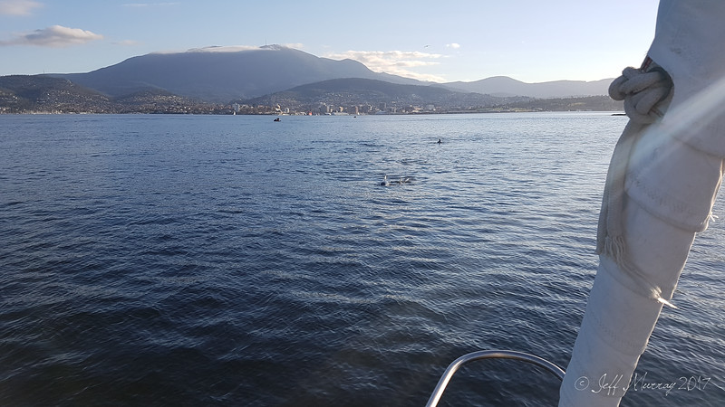 Dolphins heading for me