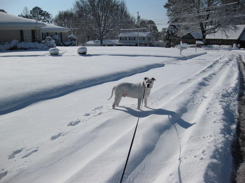Snow in Jackson_20090301_014.JPG