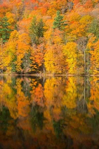 Vermont Fall 2019-16.jpg