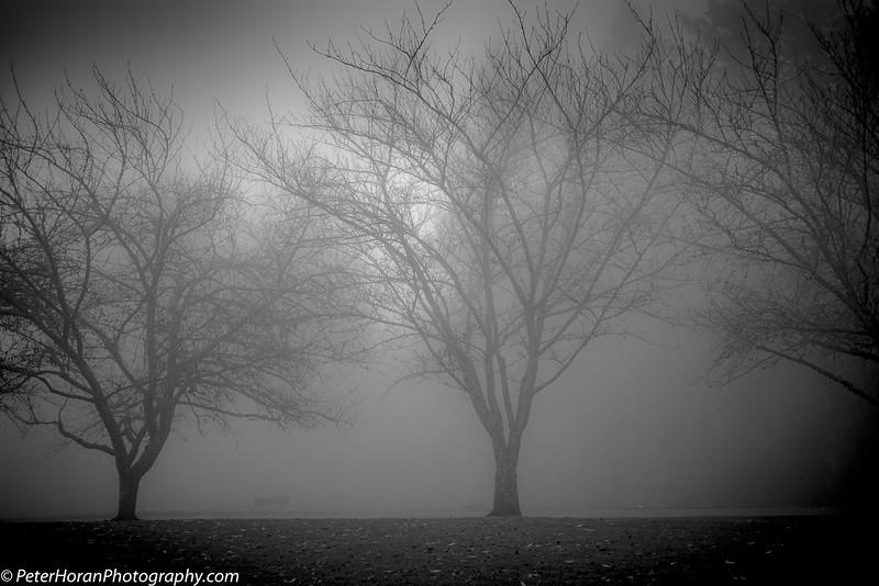 ghost-trees-2020-505-of-9_50649040683_o.jpg