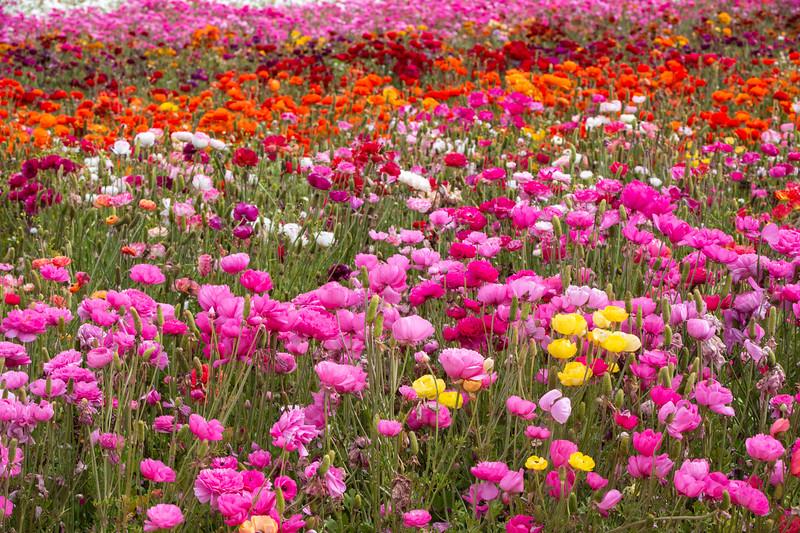 Spring Flowers B-442.jpg