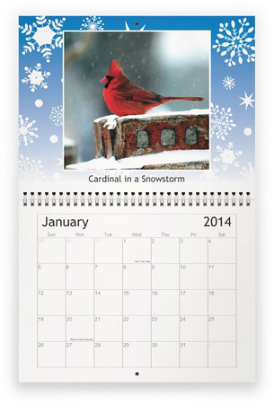 2014 Backyard Birds Calendar