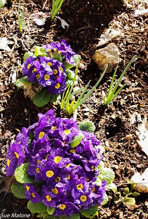 03-20-2020 Flowers at Equinox