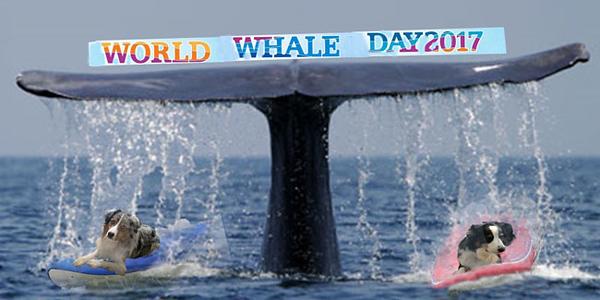 WhaleDay.GaWy_650x320.jpg