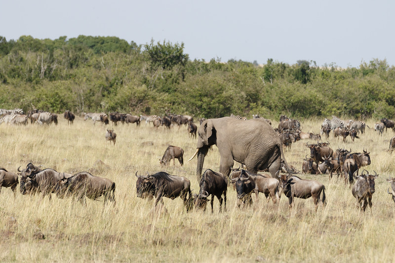 Kenya 2015-03642.jpg