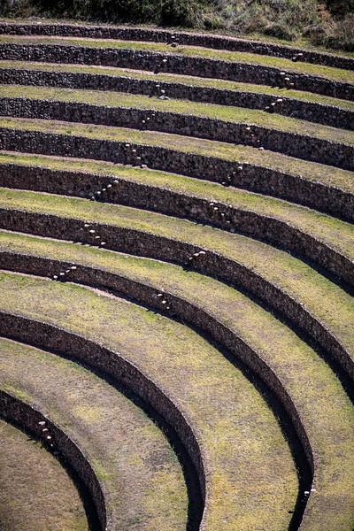 Moray Terraces-29.jpg