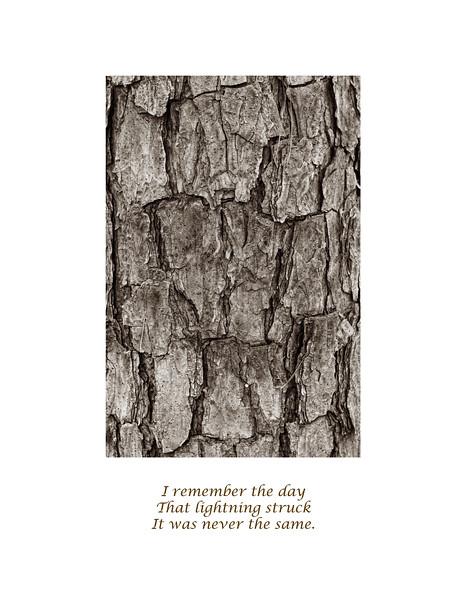 2011-01-08 PIne Bark poem 0147.jpg