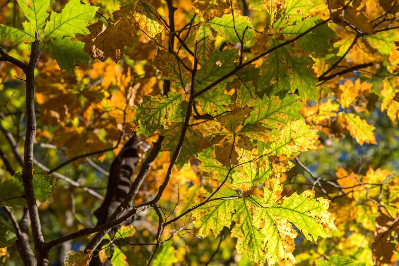 foliage-2014-70.jpg