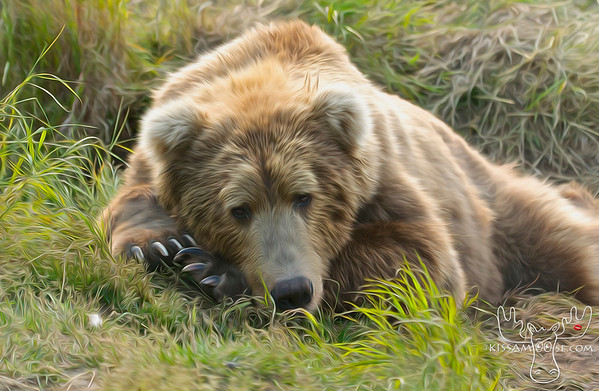 McNeil River Bears