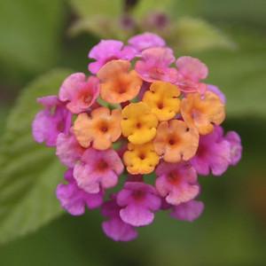 The Flowers of Ecuador