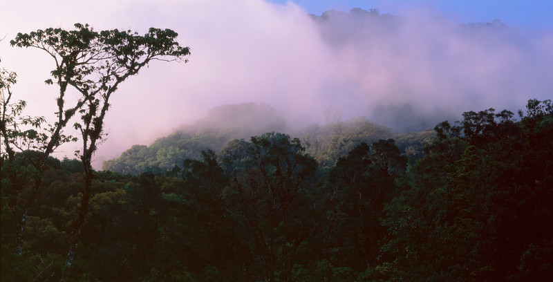 El Triunfo Biosphere Reserve, Chiapas, MEX / Thunderhead clouds at sunset above dense cloud forest canopy. 408P1