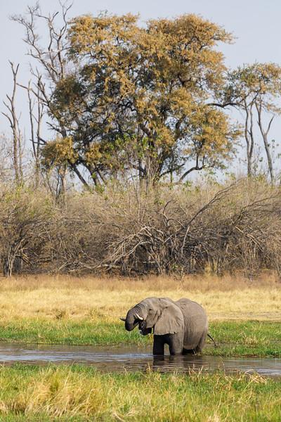 Botswana_0818_PSokol-1898.jpg