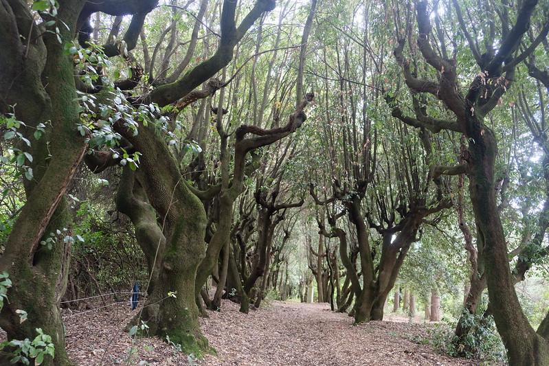 Private tour at Torrigani Gardens