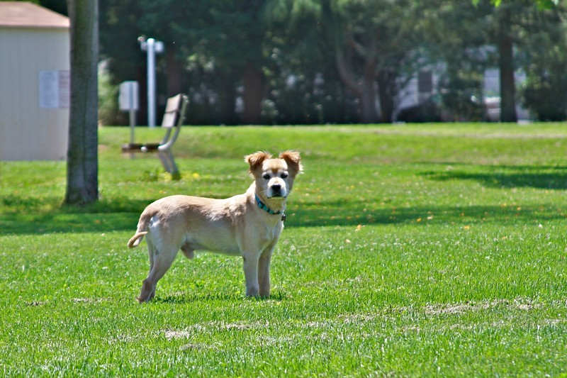 2011-06-19-0011-460 Van Buren-Leo.jpg