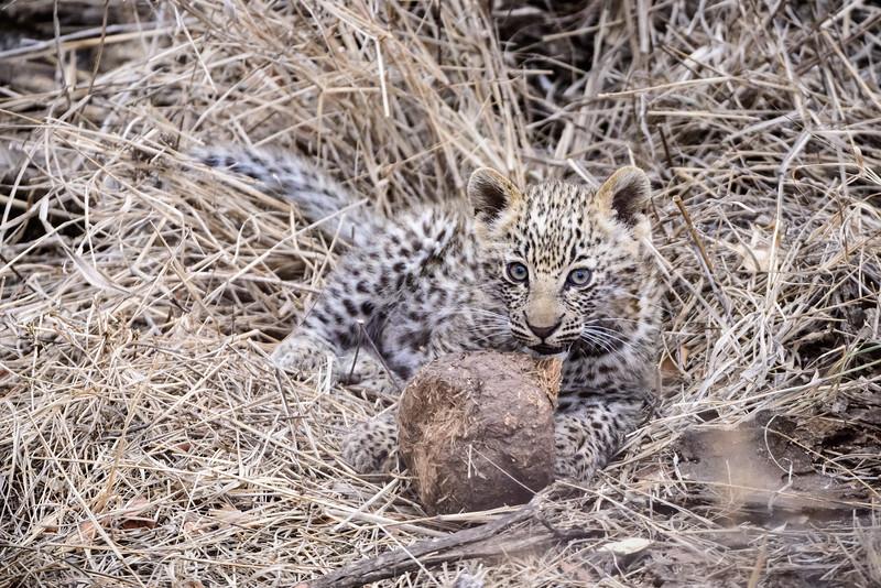 LeopardHills-20150827-5072.jpg