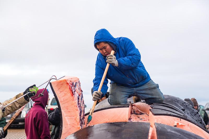 Utqiagvik Whaling-6104773-Juno Kim-nw.jpg