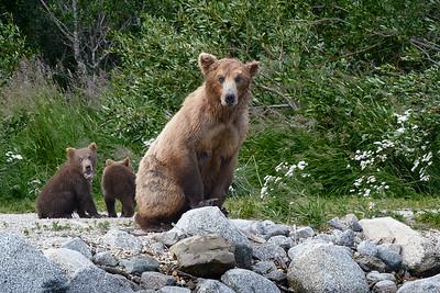 Bear 813