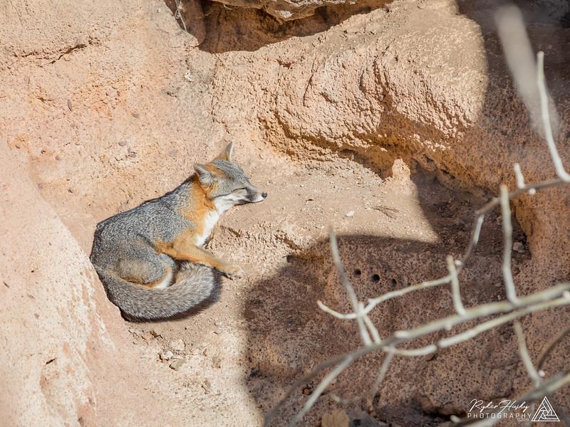 Arizona-Sonora Desert Museum-056.jpg