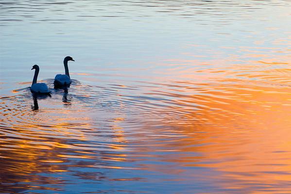 Woodbridge Lakes