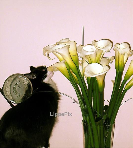LucaSniffs Flowers.jpg