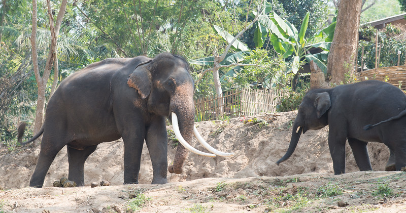 Thailand and Cambodia-17.jpg