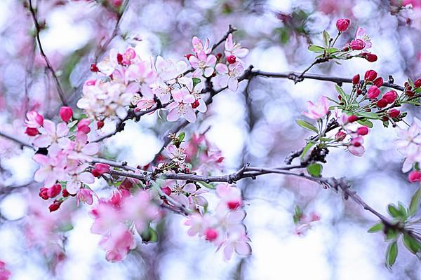 Blossom Highway
