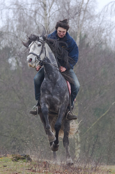 Paarden-130.jpg