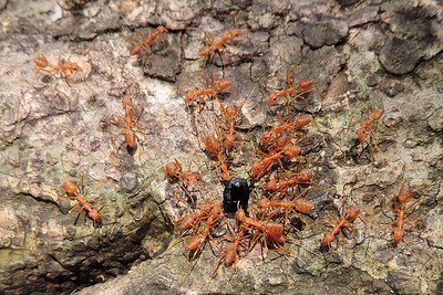 Ants, Bees & Wasps