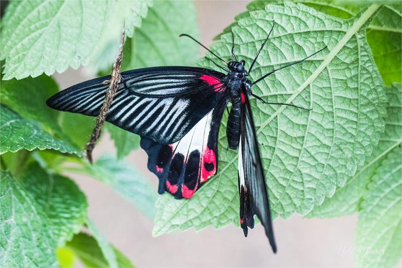2018-02-07 Papiliorama Kerzers  - 0U5A6444.jpg