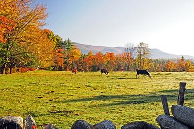 Fall in NH 2008