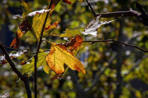 October 15 - Fll leaf.jpg