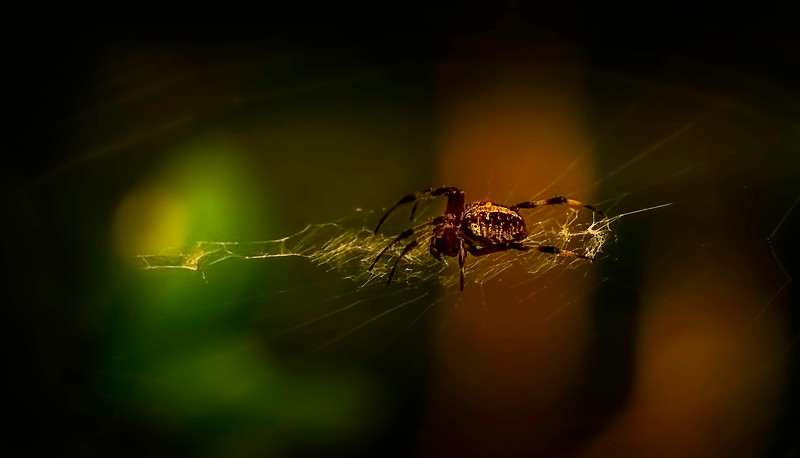 Spiders-Arachnids-138.jpg