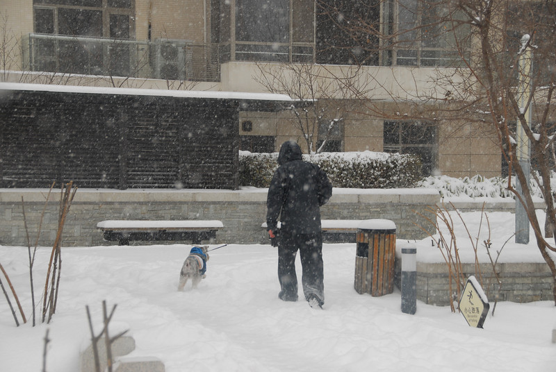 [20100103] 1st 2010 Snow in Beijing (89).JPG