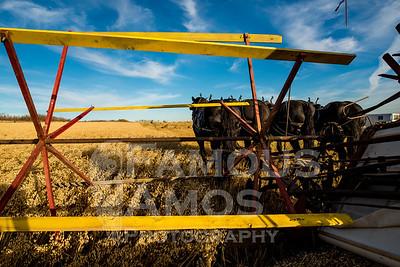 Old Fashioned Threshing- Harvest 2017