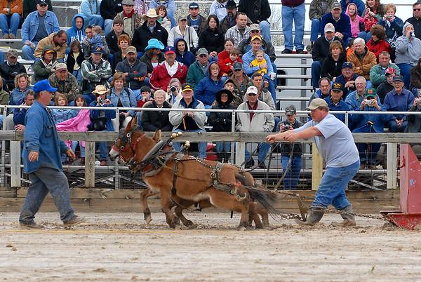 2008 Mule Pull