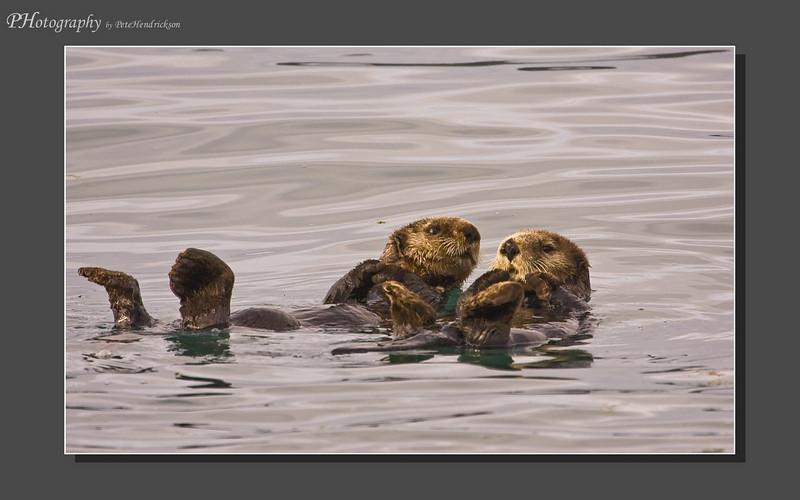 My Alaska 12-08-085.jpg