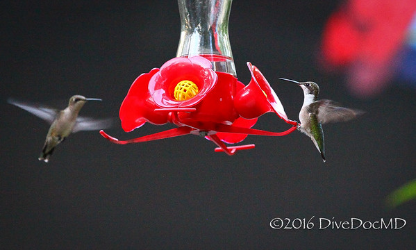July 2016 Hummers
