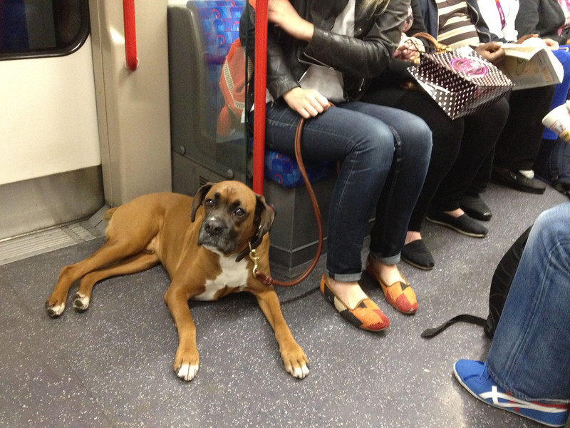 This big guy was right at home on the Tube