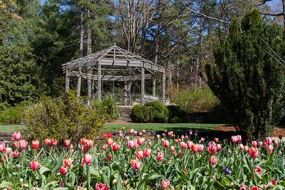 2017 03 Duke Gardens NC