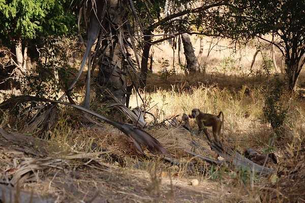 2016 - Malawi - Liwonde National Park