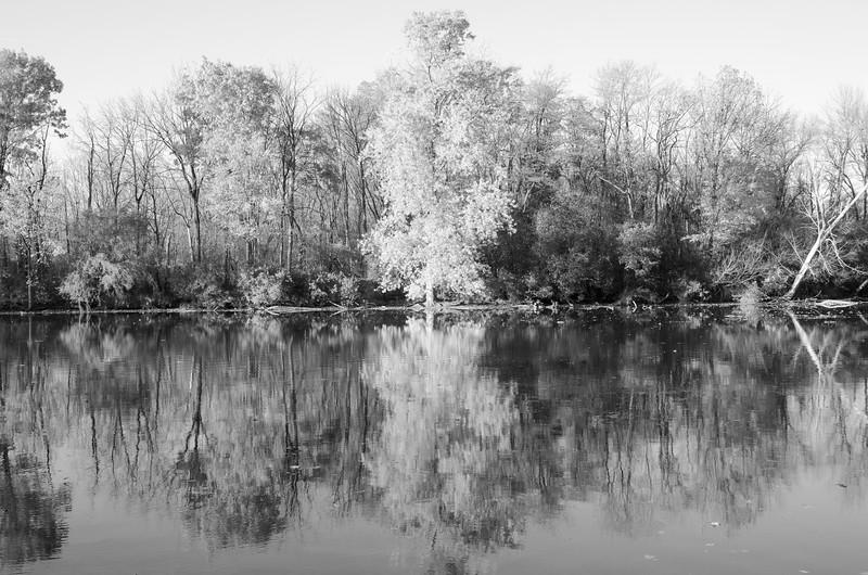 TREES REFLECTED B&W.jpg
