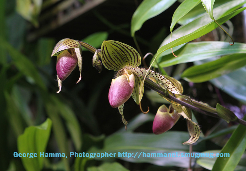A display of carnivorous plants covers one wall at the lowest rainforest level.