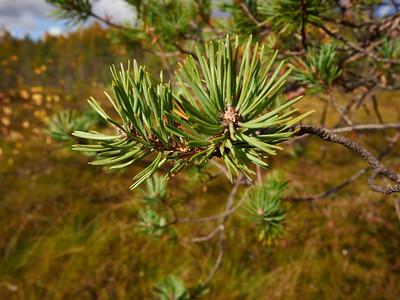 Kukan kuvia - Kukka's photos