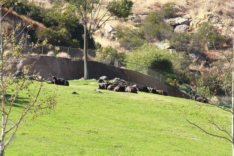 San Diego wild animal pakr 201700093.jpg
