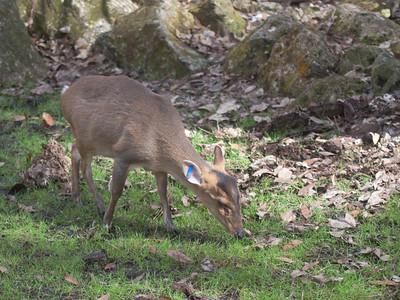 Deer & Antelope