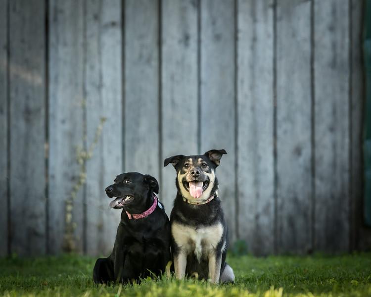 19_0712_dogs_ww-.jpg