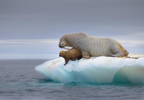 Svalbard-High Arctic